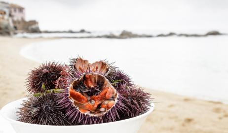 Αχινοί και Φούσκες, για τους γνώστες των θαλασσινών