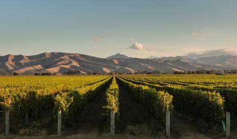 Οι φυσικές καταστροφές κοστίζουν ακριβά κάθε χρόνο στη βιομηχανία οίνου
