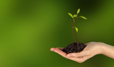 Φυτέψτε το δικό σας φυτό αβοκάντο από ένα κουκούτσι