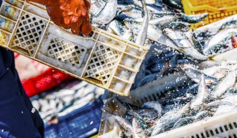 Απειλούμενα ψάρια και θαλασσινά στις ελληνικές θάλασσες
