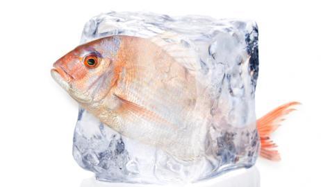 Ο κίνδυνος για τη διατροφική ασφάλεια των ψαριών δεν έγκειται τόσο στην κατάψυξή τους, όσο στη σωστή απόψυξή τους, τονίζουν οι ειδικοί