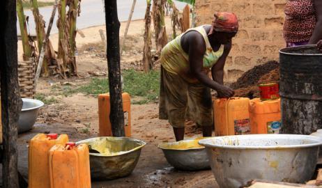 Αφρική: η καλλιέργεια φοινικέλαιου απειλεί τη βιοποικιλότητα