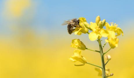 Η απαγόρευση χρήσης εντομοκτόνων δίνει στους Γάλλους αγρότες την παγκόσμια πρωτιά στα «πράσινα δάχτυλα»
