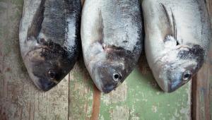 Γιατί δεν υπάρχει καλύτερη τροφή από τα ψάρια