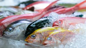 Πόσες μέρες θεωρούνται φρέσκα τα ψάρια