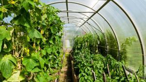 Βιολογικές καλλιέργειες θερμοκηπίου, μύθοι και αλήθειες
