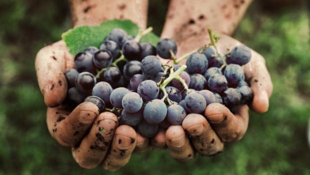 Το κρασί στην αρχαία Ελλάδα
