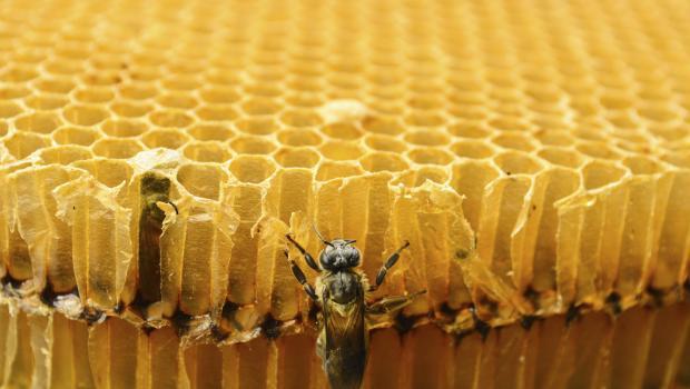 Πρόπολη για την προστασία της πόλης των μελισσών