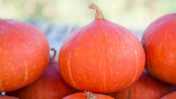 Το μαγικό ραβδάκι της κολοκύθας στην διατροφή μας