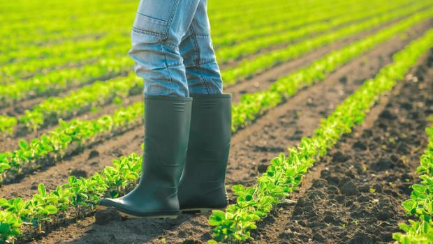 Είναι η βιολογική καλλιέργεια πραγματικά καλύτερη;