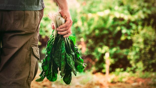 Παγκόσμια Ημέρα Περιβάλλοντος: Η υπερθέρμανση του πλανήτη θα κάνει τα λαχανικά πιο σπάνια
